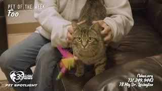 Pet Spotlight: Meet Foo