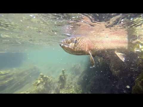 "Trout fishing in ""Arroyo Pescado"" / Patagonia"