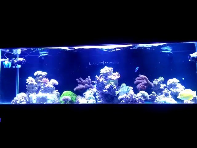 Solving Ph Problems In A Reef Tank   Beginner Guide To Saltwater Aquariums