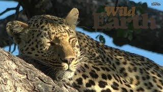 WildEarth - Sunrise Safari, 27 February 2020