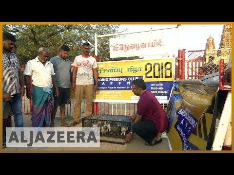 🐦 Pigeon racing takes flight in 🇱🇰 Sri Lanka | Al Jazeera English