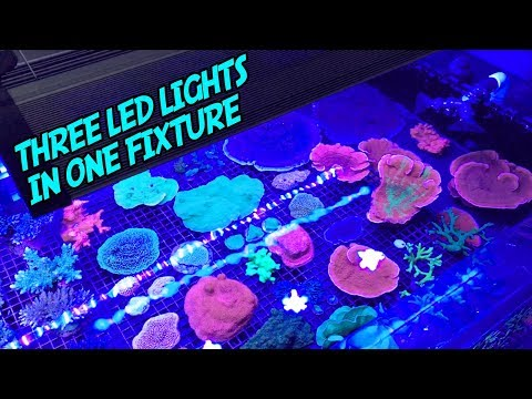 Recurve LED Review: An AWESOME New Kind of Aquarium Light!