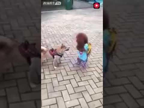 Прикольная собачка ходит как человек