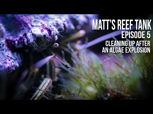 Matt's Reef Tank | Episode 5 | Cleaning up after an Algae  Explosion