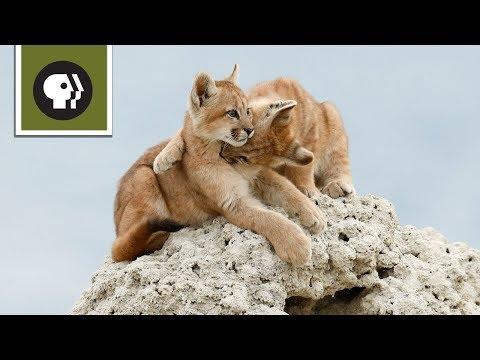 Wild Kitty Playtime