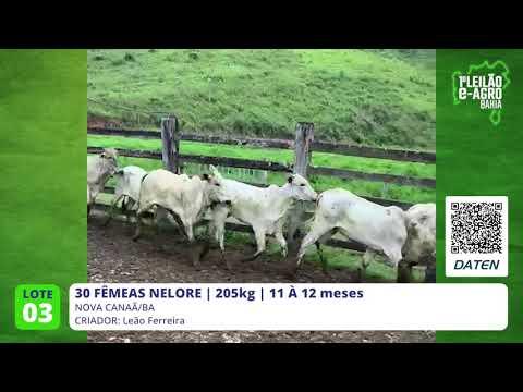 30 FÊMEAS NELORE - NOVA CANAÃ-BA