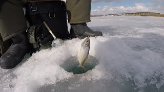 Как поймать щуку на иркутском водохранилище