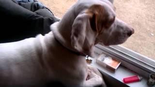Nala growling at dog outside