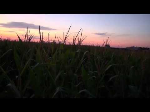 Illinois Certified Crop Advisor