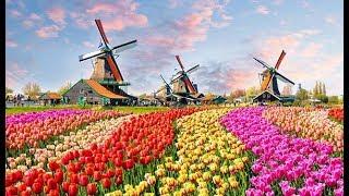 The Worlds Biggest Flower Garden In Amsterdam - Keukenhof Gardens
