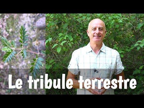 Akroustal le traitement du psoriasis