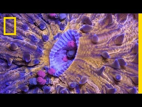 Time-Lapse: Bizarre, Beautiful Ocean Creatures | Short Film Showcase thumbnail