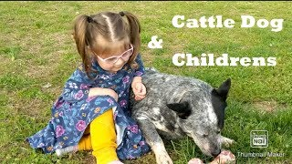 Australian Cattle Dog With Children