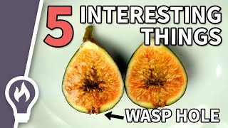 5 Interesting Things