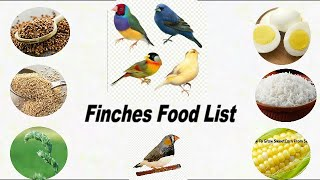 15 Food Your Finches Birds / Finches Birds Food list / What Food your Finches Birds