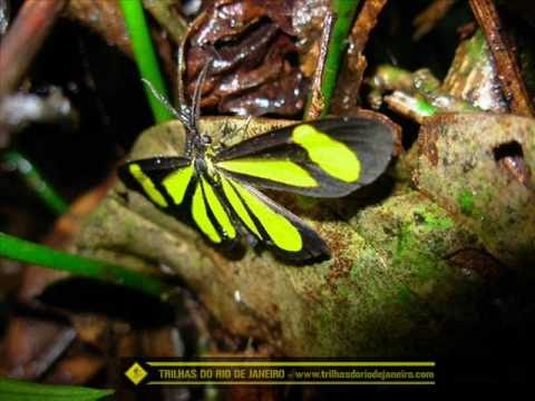 O poeta e a Natureza (Imperio Serrano - Velha Guarda)