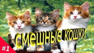 СМЕШНЫЕ КОШКИ.Приколы про кошек и котов #1(Топ подборка 2018).VERY FUNNY CATS.