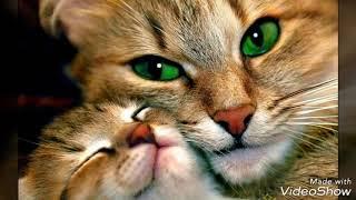 Котята! Милота!
