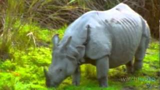 India's Flora and Fauna