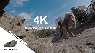 【Animal FPV】4K Snow Monkey in Hillside 覗く! ニホンザルの食事 【アニマルFPV】