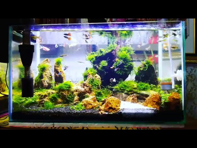 Guppy tank with simple moss aQuascape design