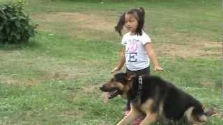 GERMAN SHEPHERD PROTECTING 4 YEAR OLD LITTLE GIRL FROM BAD GUY
