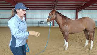 Daily Dose of Horsemanship Homework: Ground Manners #10, Ground Tying Part 2