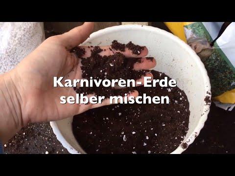 Spezielle Erde für Fleischfressende Pflanzen super günstig selber mischen! | Tutorial | Karnico