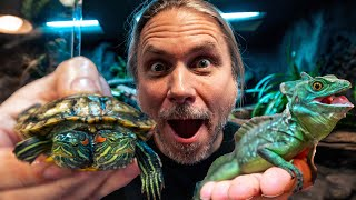 TWO HEADED TURTLE and JESUS LIZARDS GET NEW HABITATS!! !! | BRIAN BARCZYK by Brian Barczyk