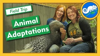 Adaptations At Animal Wonders - Field Trip