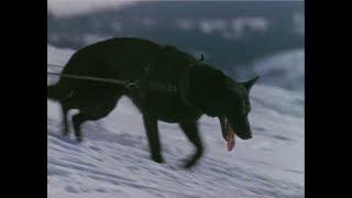 Villain Defeats: Spitz (The Call of the Wild)
