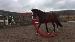animales el caballo esta jugando