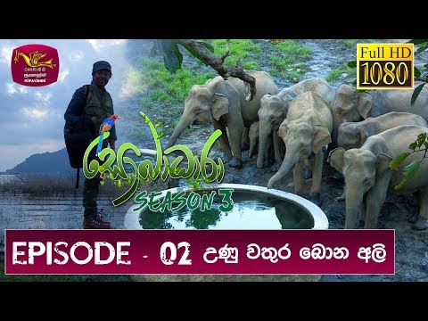 Sobadhara - Sri Lanka Wildlife Documentary | 2019-03-08 | Elephant