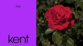 "Video thumbnail of ""Kent - Gigi (Official Audio)"""