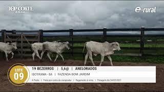 19 BEZERROS ANELORADOS