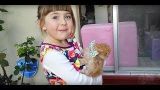 Ellie's 6th Birthday - Kitten Surprise