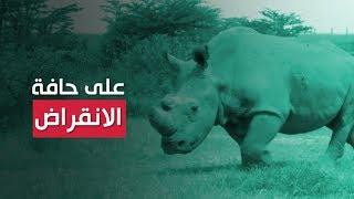 العلماء سيمنعون انقراض وحيد القرن الأبيض رغم موت آخر ذكر