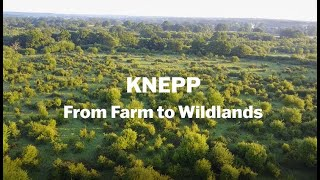 Thumbnail for Knepp - From Farm to Wildlands
