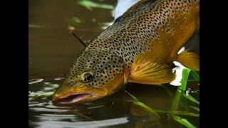 The need for accuracy: Dropper Nymphs