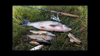 Ловля крупного жереха. Секреты рыболова.