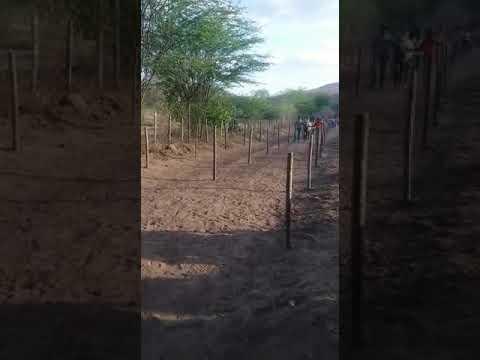 A corrida do assentamento polinésia. Na região de Boa vista do tupim BA