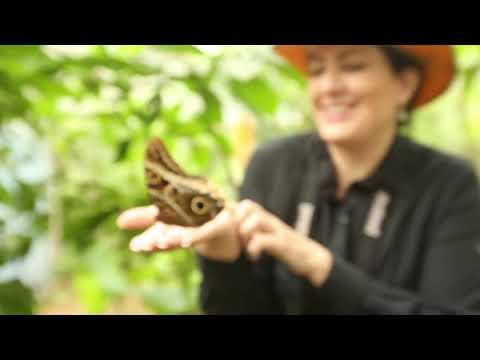 """""""El baile de las mariposas"""" - El centro de vida de Mashpi Lodge"""