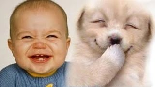 Funny videos 2015 - Babies Laughing at Dogs
