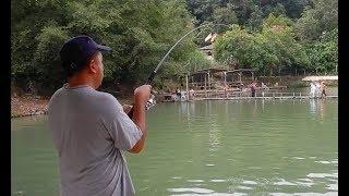 Pancing Kolam Taman U Bawah (Uni Fishing) - Patin Mekong, Chao Phraya