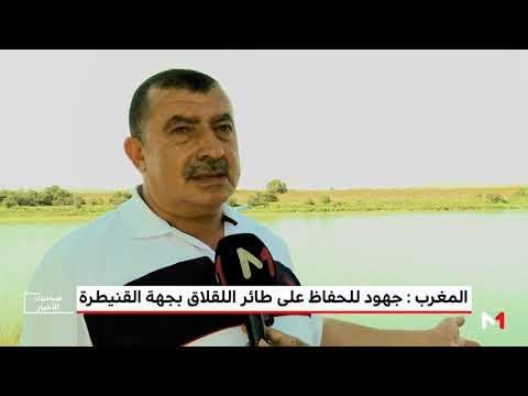 العرب اليوم - شاهد: جهود للحفاظ على طائر اللقلاق في جهة القنيطرة