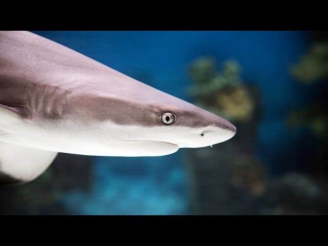 Best Sharks for a Home Fish Tank   Aquarium Care