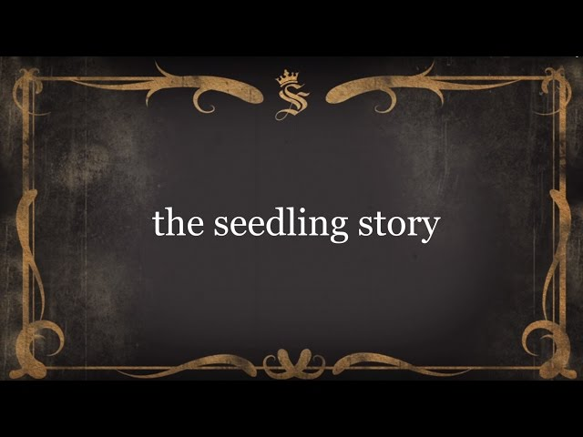 The Seedling Story