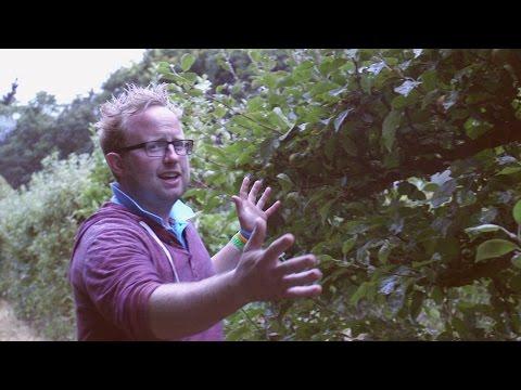 Get Gardening: Summer pruning espaliers