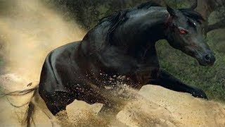 15 Most Incredible Horse Breeds In The World!