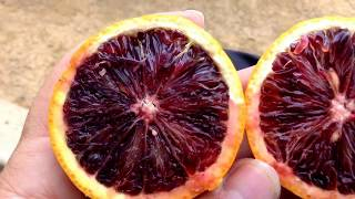Blood Orange Tastes Like A Cross Between A Pomegranate And Orange. Nothing Like A Grapefruit.